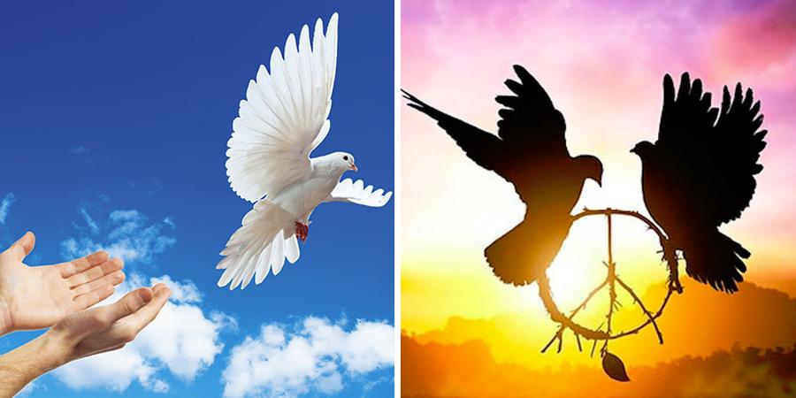 Imagen de palomas volando