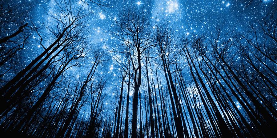 Arboles bajo las estrellas