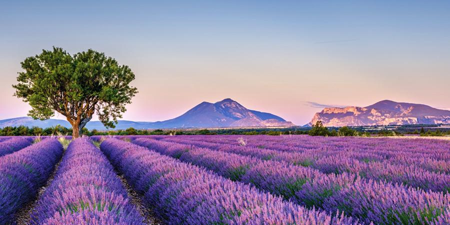 Paisaje con montañas y flores moradas